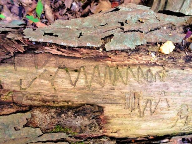 Tree-hieroglyphs 2