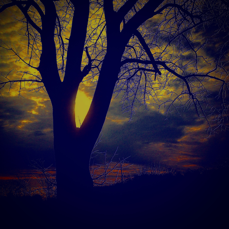 """The beauty of nature ambushesus."""